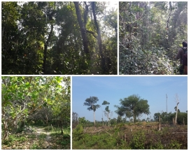 forest and farming land within the Anglong Kragn CPA